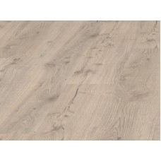 532064 Дуб Альпийский серый