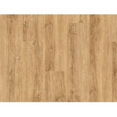 B0Q1003 Chalk Oak